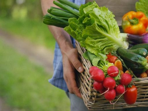 Vegetables that Boost your Immune System