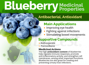 blueberry medical property for fitness diet