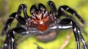 Instructions for making the funnel-web spider toxin were added to the fungus's genetic code